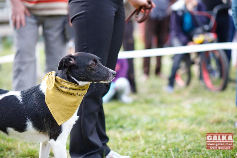 Кубок Сірка 2014, собака, пес, виставка собак, Dog_0033