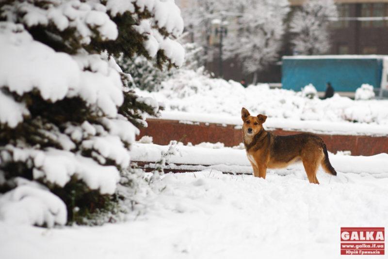 Сніг, іній, погода, Франківськ, ратуша_9582