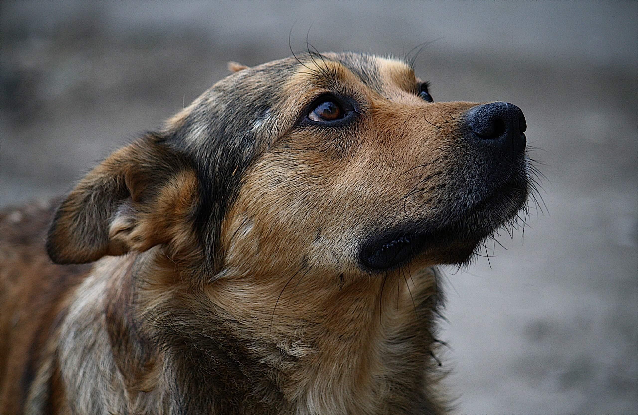 У Калуші безпритульні собаки погризли тіло мертвого чоловіка