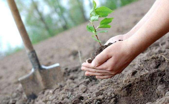 За рік у Франківську висадили понад тисячу дерев