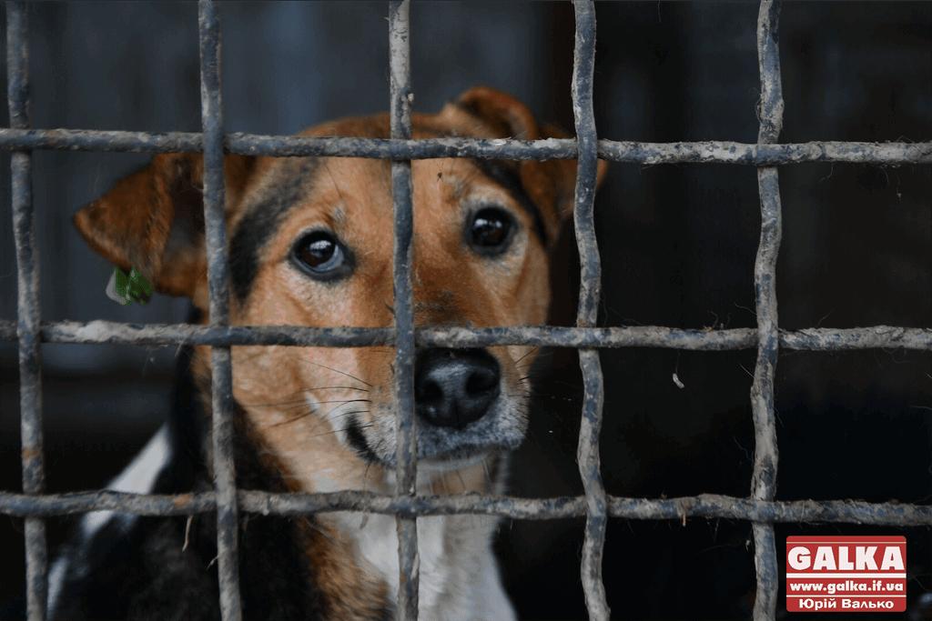 Франківців кличуть на благодійний вечір, аби допомогти безпритульним тваринам (ФОТО)
