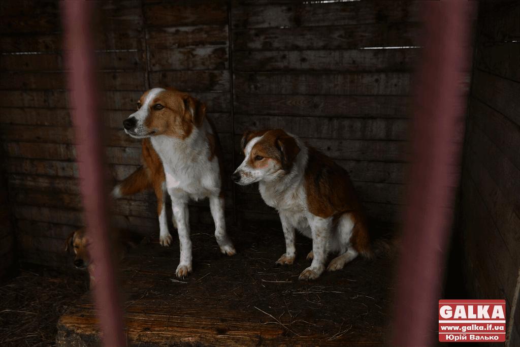 """У Франківську запустили """"Сіркочелендж"""", аби допомогти безпритульним собакам (ВІДЕО)"""