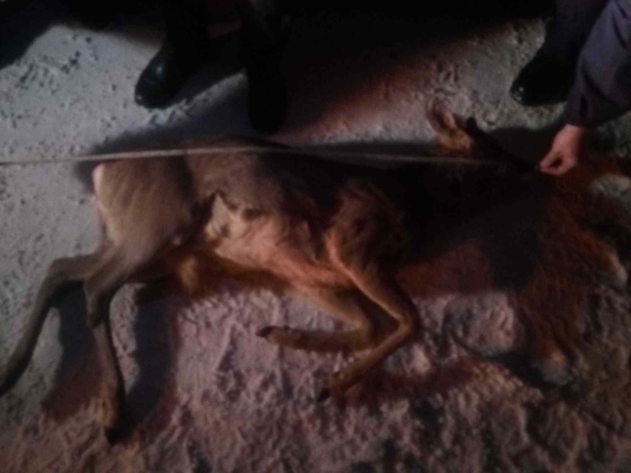 У Богородчанському районі поліція затримала озброєного чоловіка з вбитою косулею. Той пояснив, що тварину знайшов (ФОТО, ВІДЕО)