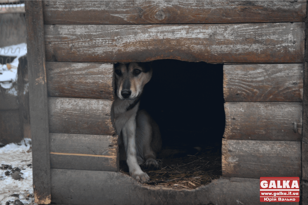 У Франківську зменшилась кількість безпритульних тварин