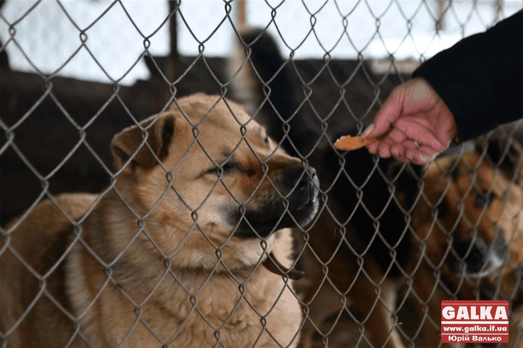 """Калуський """"Дім Сірка"""" просить допомогти зібрати гроші на корм для тварин"""