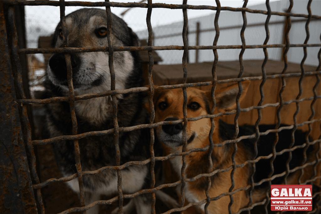 Притулку для тварин потрібні теплі речі – франківців просять допомогти