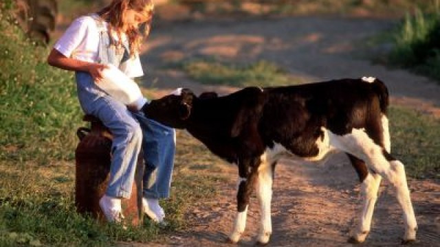 Понад 26 мільйонів гривень отримали прикарпатці за утримання великої рогатої худоби