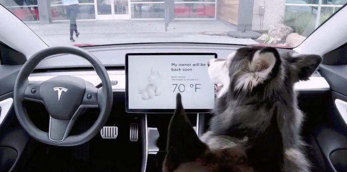 В електромобілях Tesla з'явився режим для собак