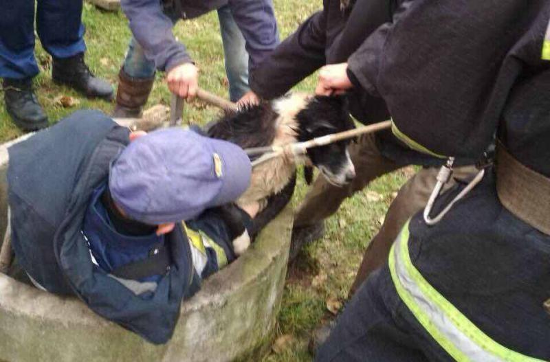 У Калуші рятувальники врятували від смерті собаку