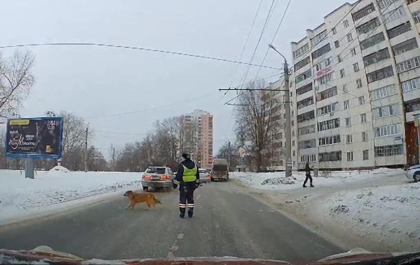 Ввічливий собака-пішохід став зіркою Інтернету (ВІДЕО)