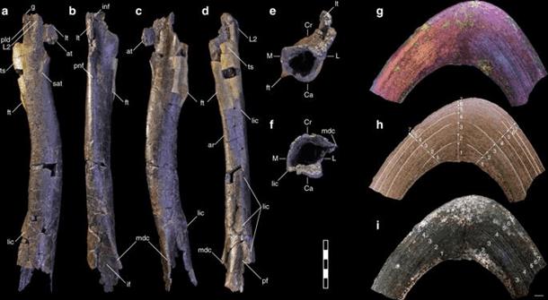 У США вчені знайшли рештки міні-тиранозавра (ФОТО)