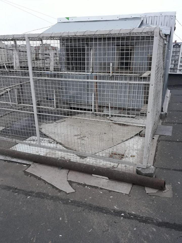 У франківській багатоповерхівці любителі голубів продірявили дах (фотофакт)