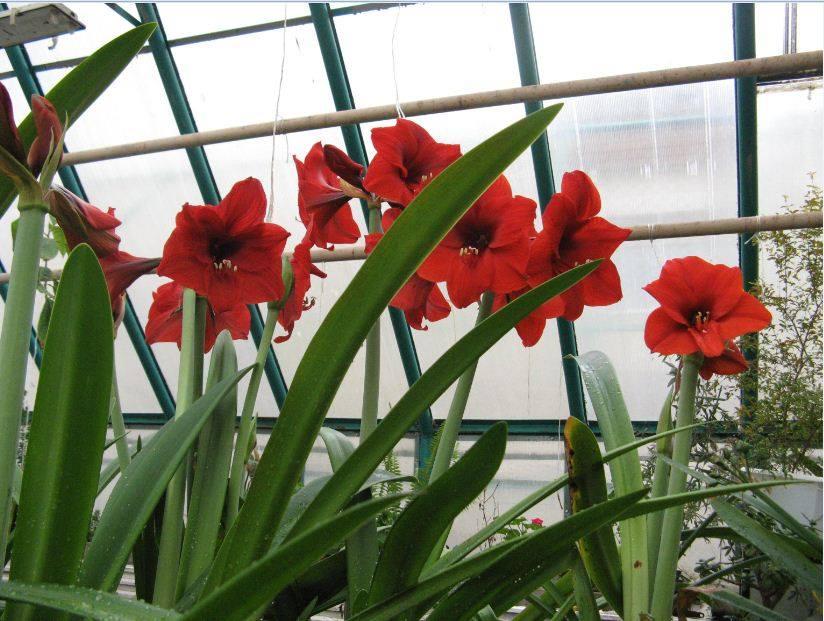 Як у теплиці франківської школи-ліцею серед зими цвітуть квіти (ФОТО)