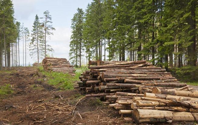 Франківський військовий лісокомбінат оштрафували на півмільйона гривень за незаконну вирубку лісу