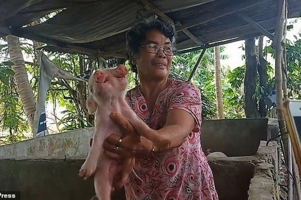 На Філіппінах народилося двоголове порося (ФОТО, ВІДЕО)