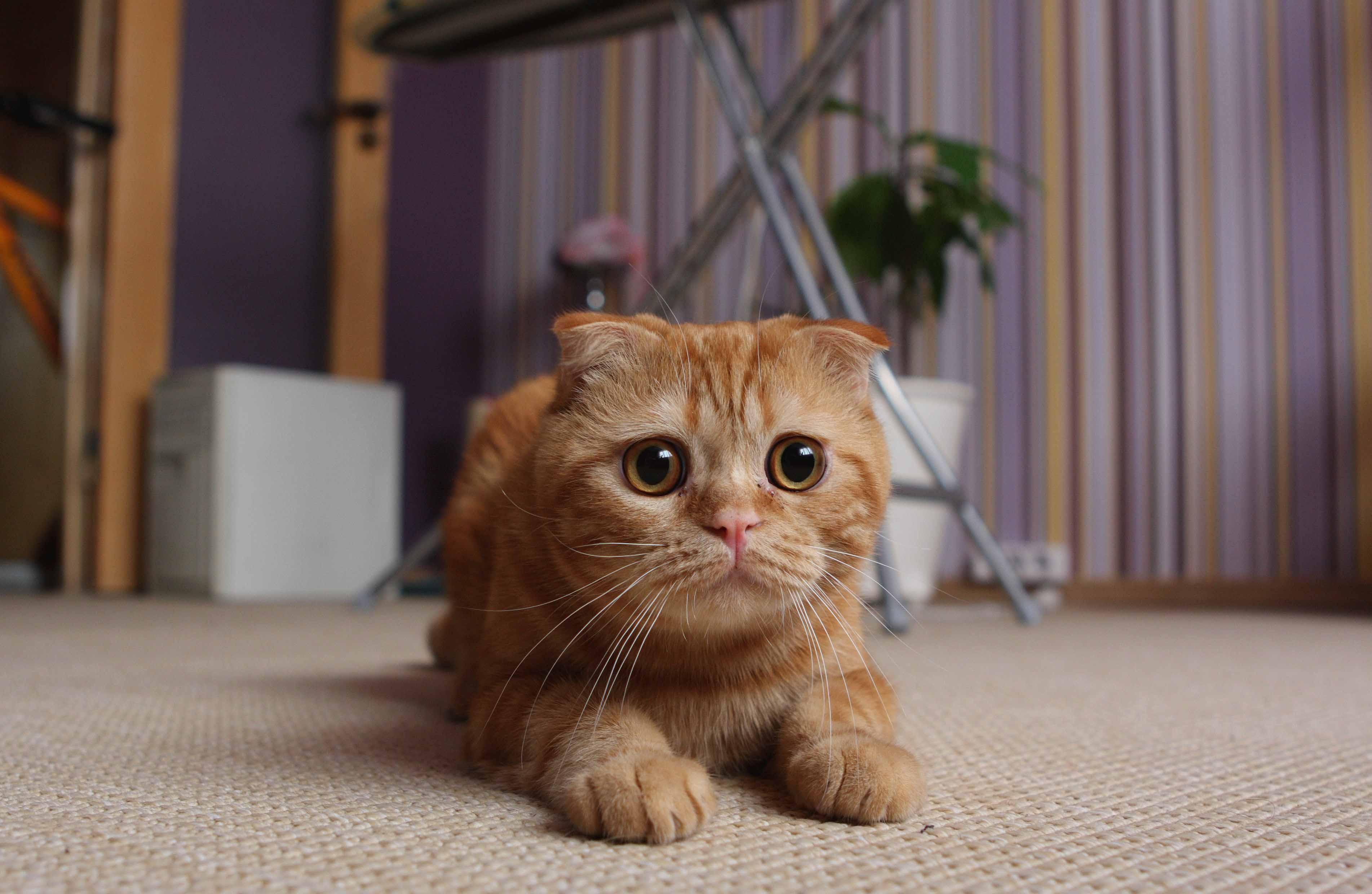 Люди заражають котів тривожністю та стресом