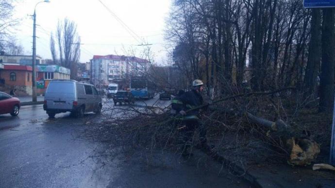 У Вінниці через падіння дерева загинула дитина
