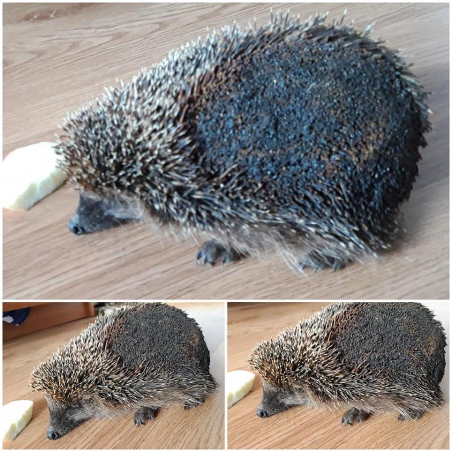 На Прикарпатті дівчина врятували їжака, який горів у сухій траві (ФОТО)