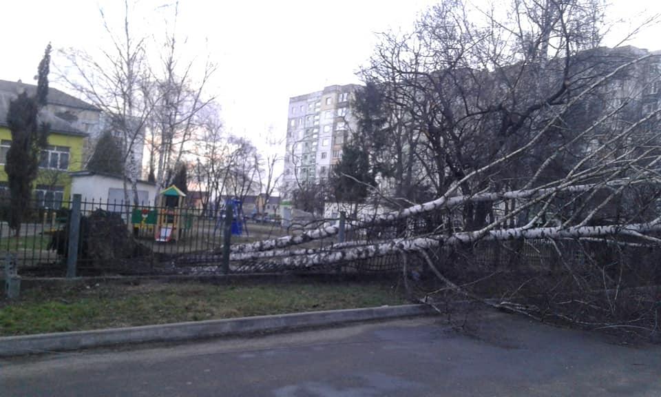 Повалені дерева та зірвані дахи. На Франківщині шквалистий вітер наробив збитків (ФОТО)