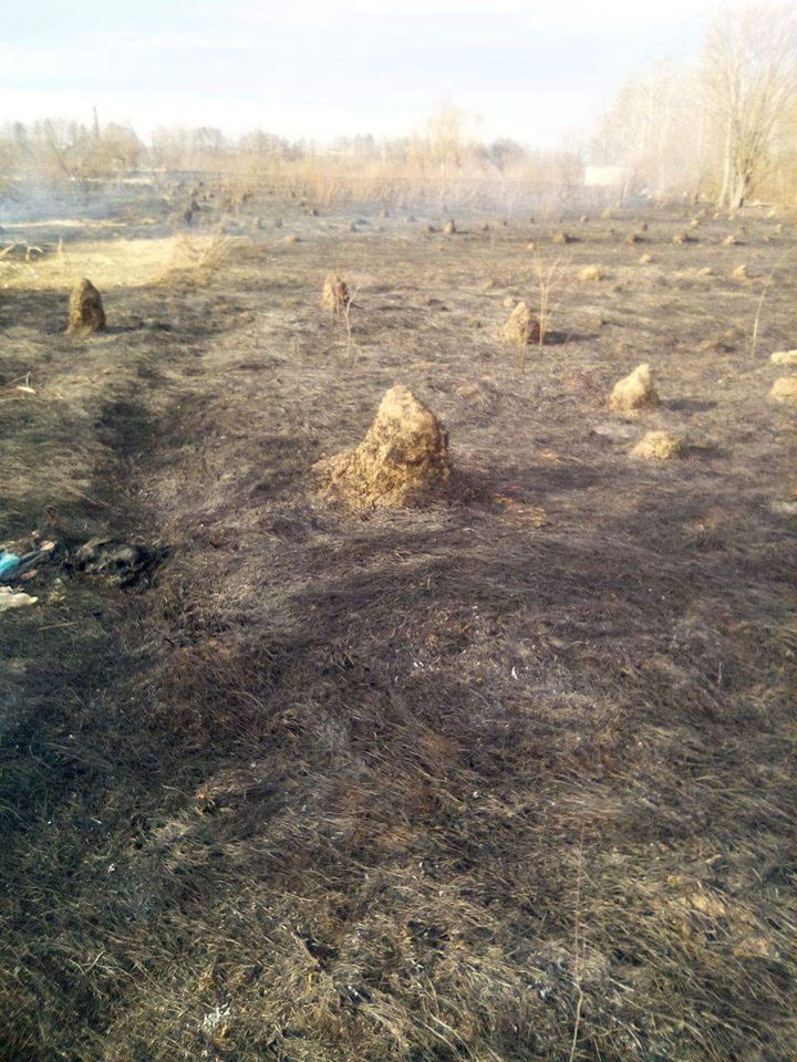 У Хриплині рятувальники сім годин гасили масштабну пожежу сухої трави (ФОТОФАКТ)
