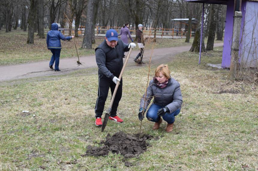 Понад 300 дерев висадили небайдужі рогатинці у місцевому парку (ФОТО)