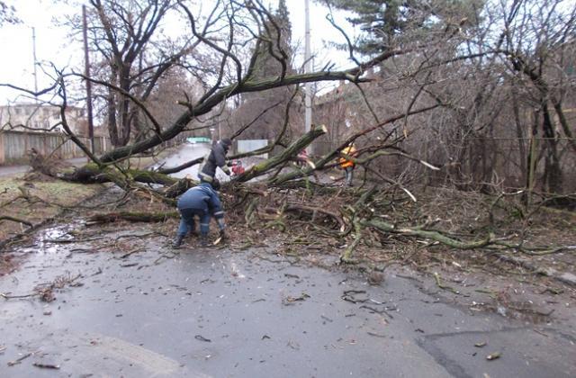 Через повалені негодою дерева загинули дитина і молода жінка