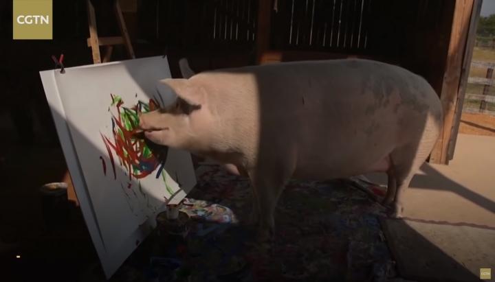Африканський Пікассо: Талановита свиня малює в стилі абстрактного експресіонізму