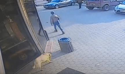 У прикарпатському містечку безпритульні собаки накинулись на дитину. У школяра прокушене стегно та забої (фото+відео)