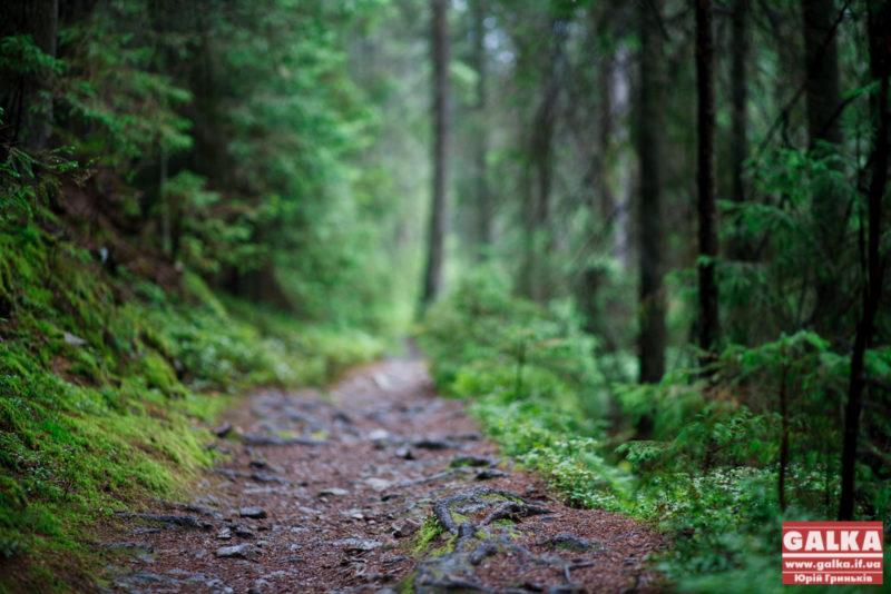 Прикарпатцям нагадують, як відпочити у горах безпечно