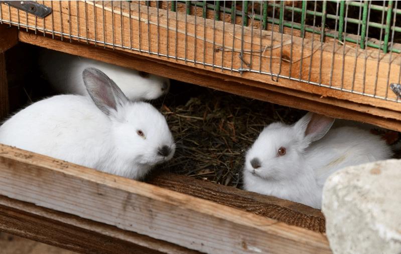 У Франківській дитячій екологічній станції планують зробити ремонт (ФОТО)