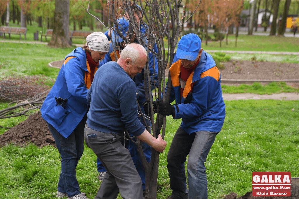 """Небайдужі франківці у міському парку посадили екзотичні """"Пам'ятні дерева""""  (фоторепортаж)"""
