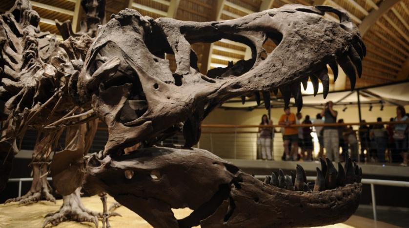 Дитинча тиранозавра продали через eBay за майже три мільйони доларів