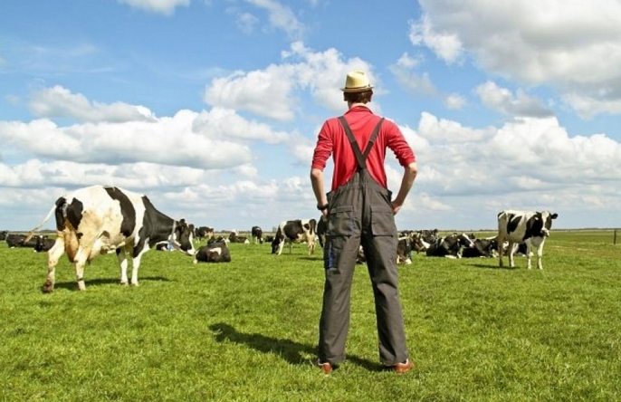 Селяни Прикарпаття отримають дотації за утримання молодняку великої рогатої худоби