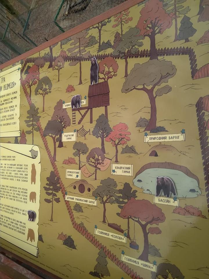 У Галицькому нацпарку створили гру, завдяки якій можна дізнатись все про бурого ведмедя (ФОТО)