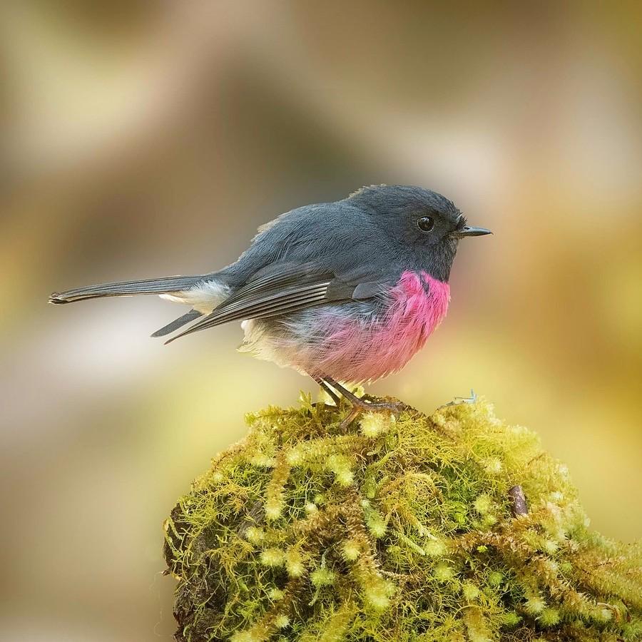 Неймовірної краси птахи на світлинах талановитого фотографа з Австралії (ФОТО)