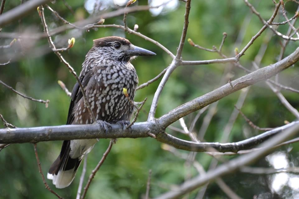 В Галицькому нацпарку оселився птах, який не характерний для цих територій (фотофакт)