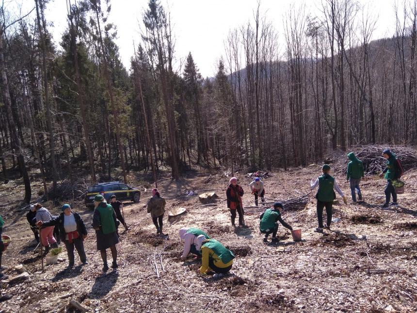 Майже три тисячі саджанців хвойних дерев висадили на Болехівщині