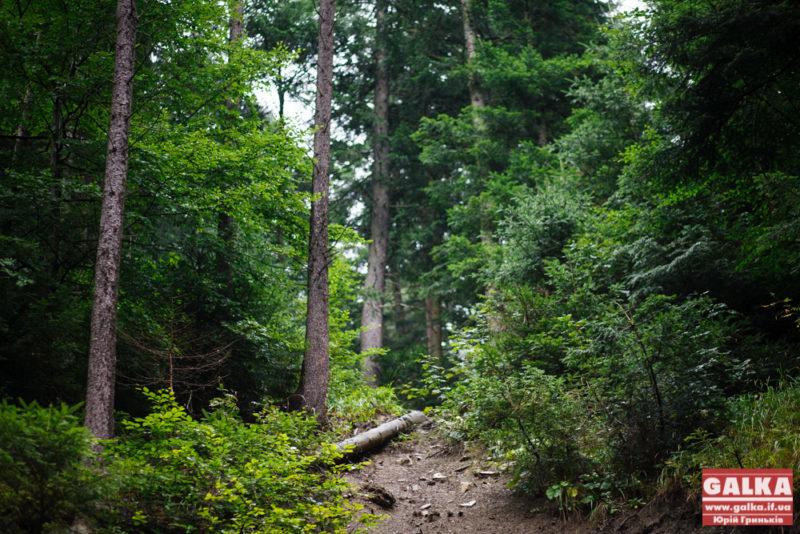 У лісі на Богородчанщині заблукали туристи з Києва