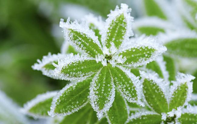 У середу в області чекають сильних вітрів, у четвер – заморозків