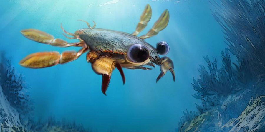 Милий кошмар. Вчені відкрили вимерлого краба з величезними очима