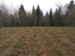 На Рожнятівщині школярі висадили п'ять тисяч сіянців ялини  (фотофакт)