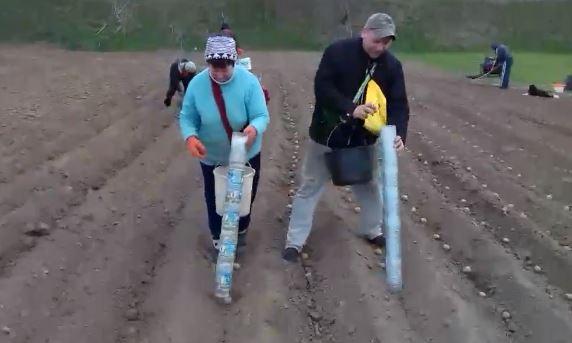 Не горбитись на городі: прикарпатець винайшов лайфхак, як легко садити картоплю (ВІДЕО)