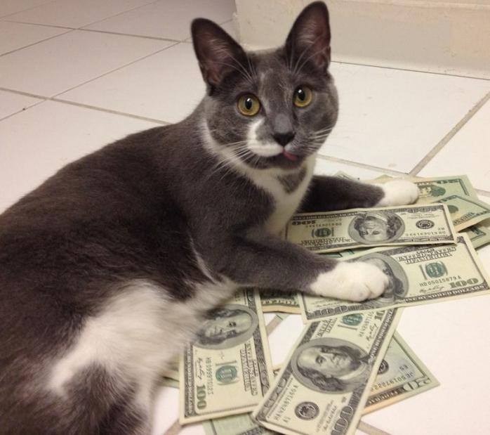 Кіт вкрав лотерейний білет американки з виграшом 50 тис. доларів
