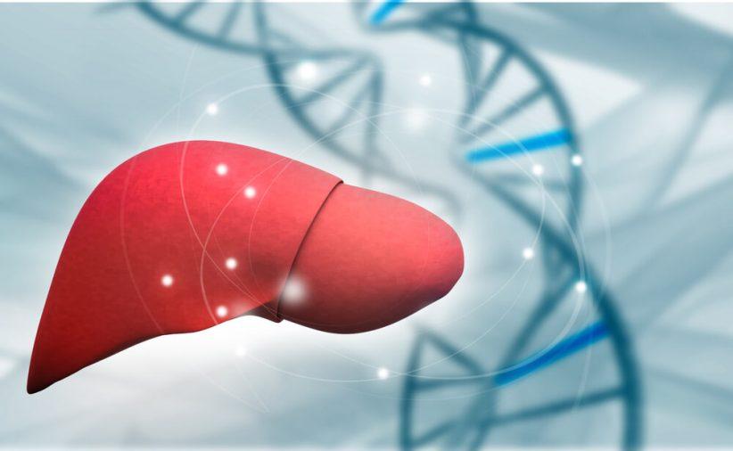 Галка рекомендує: найкорисніші продукти для регенерації печінки