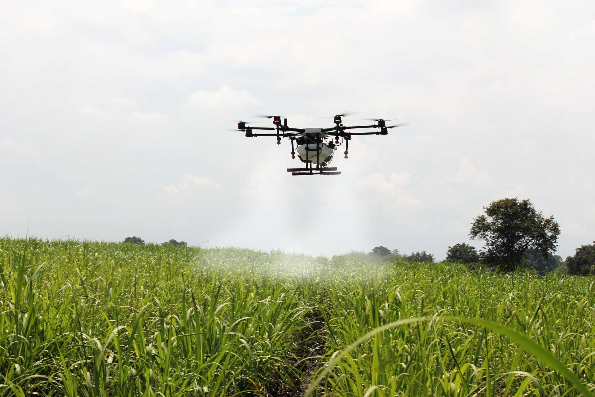 У Китаї набирає популярність професія пілота сільгоспдронів