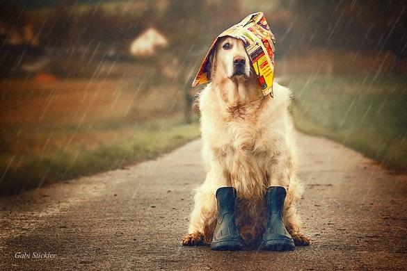 Сильні дощі, град і грози: прикарпатців попереджають про значне погіршення погоди