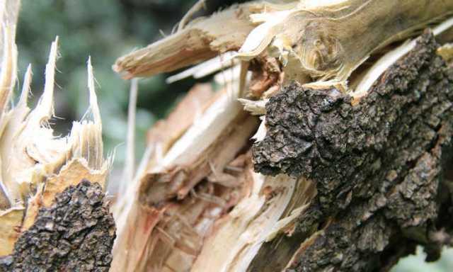 Десятки повалених дерев і підтоплені землі: Калущина потерпає від негоди