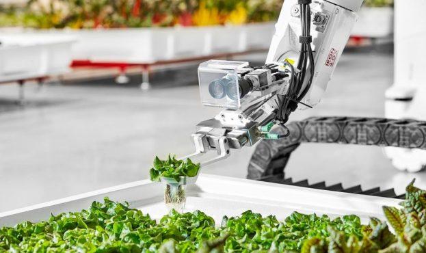 У США зібрали перші овочі, вирощені роботами