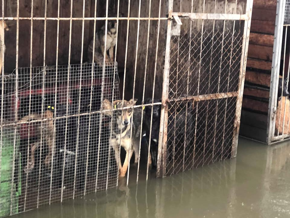Притулок для собак у Калуші – під водою. Тваринам загрожує смерть (ФОТО, ВІДЕО)