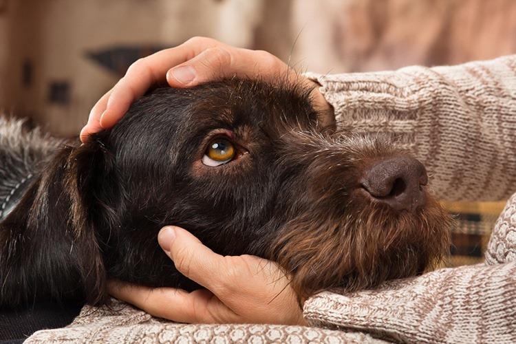"""""""Дім Сірка"""" шукає працівників. Головна вимога – любити собак"""